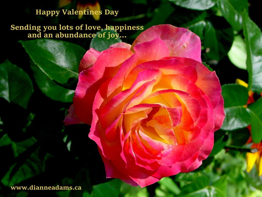 Sending you a Virtual Rose infused with Love on Valentines Day. xo
